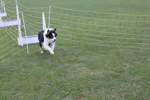Le Flyball